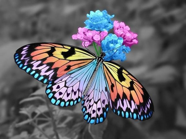 papillons du monde - Image De Papillon
