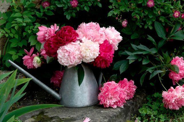 """Résultat de recherche d'images pour """"centerblog belle beau bouquet de pivoine"""""""